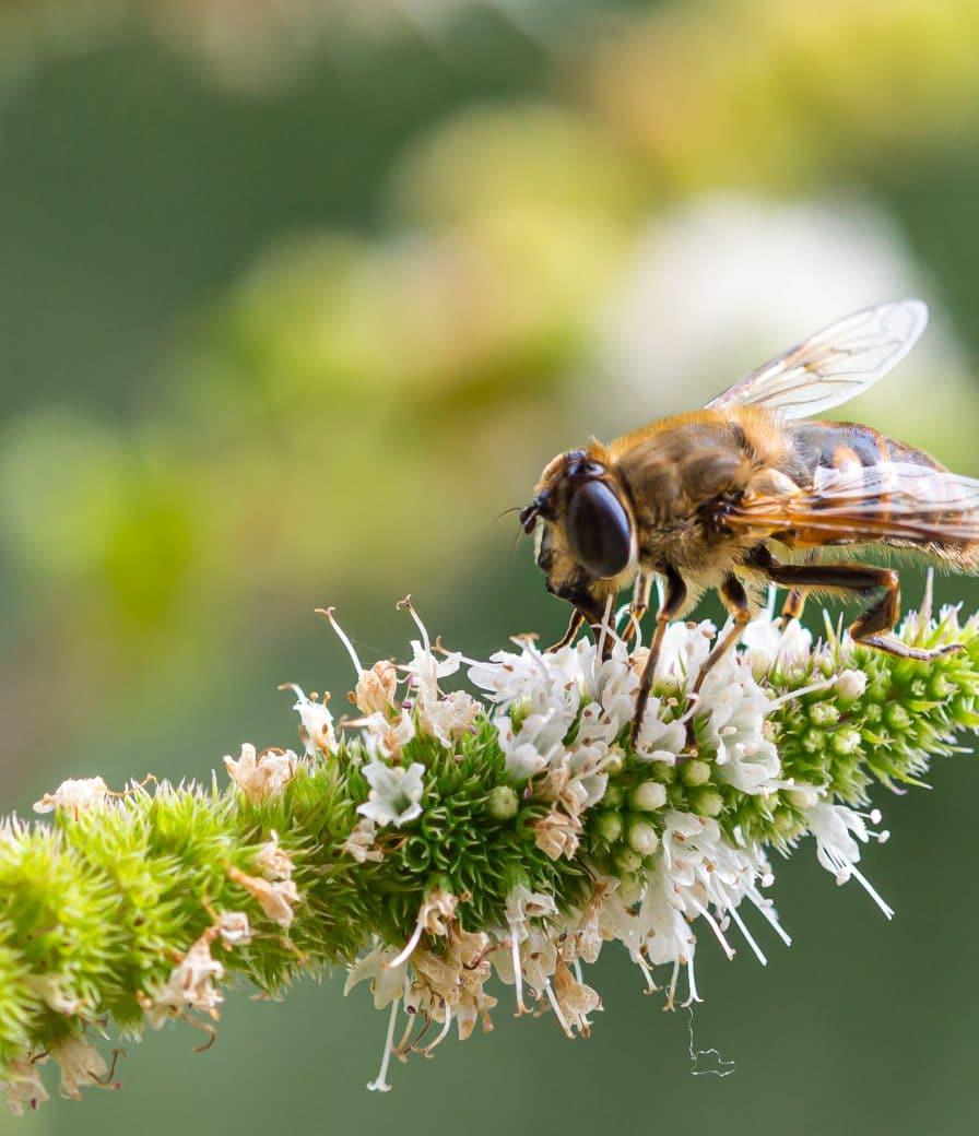 biodiversity research at JADS and Naturalis